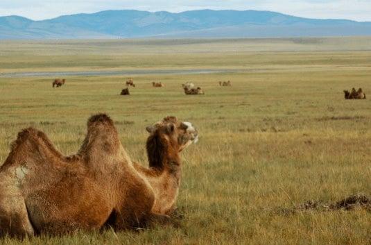 mongolia experiences wildlife