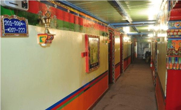 lhasa dhood gu 5