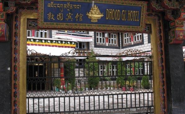 lhasa dhood gu 8