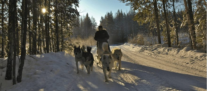 winter_ekaterinburg_dogsledging